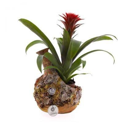 comprar-centro-de-mesa-anfora-barro-rojo-decorado-marino-01