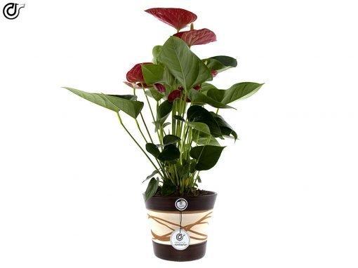 comprar-maceta-de-barro-rojo-Hilo-Nogal-modelo-J18-01