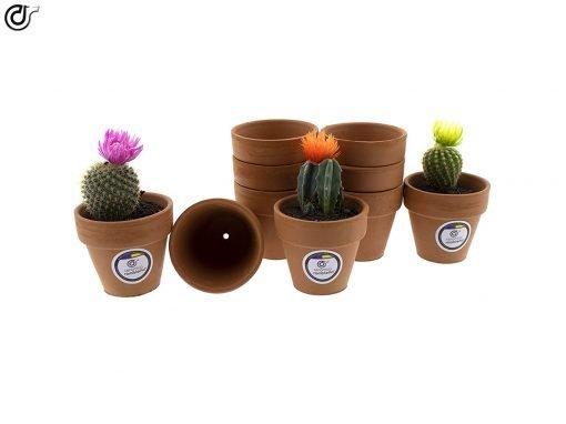 comprar-macetas-para-cactus-macetas-de-barro-modelo-d86-01