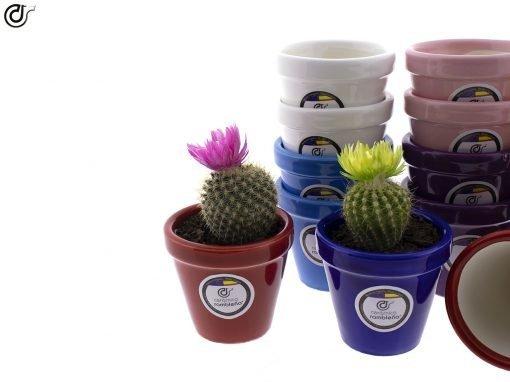 comprar-macetas-para-cactus-macetas-decoradas-modelo-d77-02