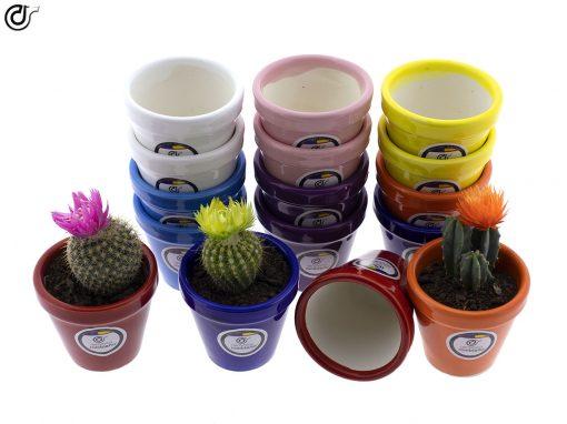 comprar-macetas-para-cactus-macetas-decoradas-modelo-d77-03