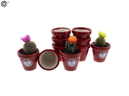 comprar-macetas-para-cactus-macetas-decoradas-modelo-d78-01