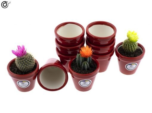 comprar-macetas-para-cactus-macetas-decoradas-modelo-d78-03