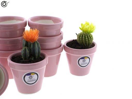 comprar-macetas-para-cactus-macetas-decoradas-modelo-d79-02