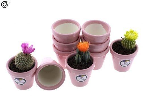 comprar-macetas-para-cactus-macetas-decoradas-modelo-d79-03
