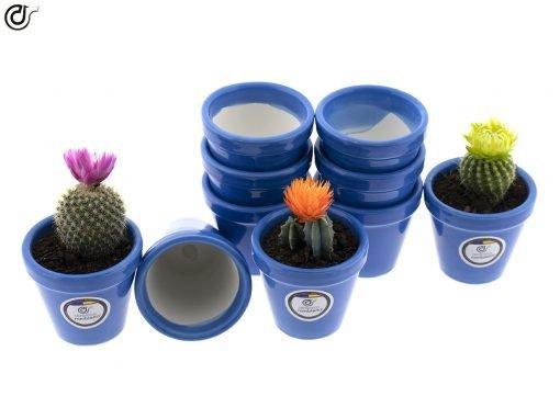 comprar-macetas-para-cactus-macetas-decoradas-modelo-d80-03