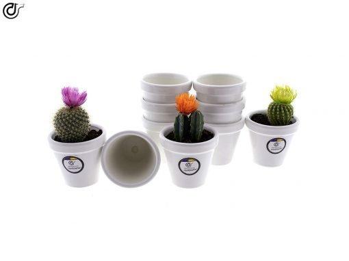 comprar-macetas-para-cactus-macetas-decoradas-modelo-d81-01