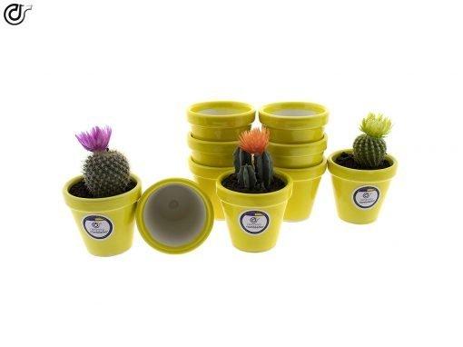 comprar-macetas-para-cactus-macetas-decoradas-modelo-d83-01