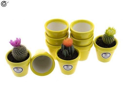 comprar-macetas-para-cactus-macetas-decoradas-modelo-d83-03