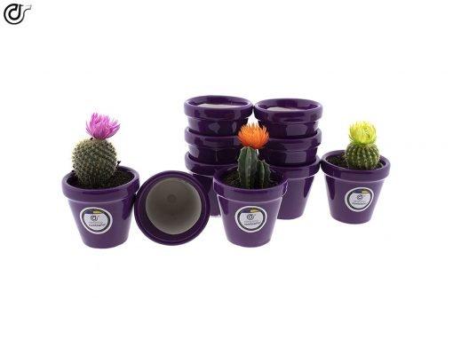 comprar-macetas-para-cactus-macetas-decoradas-modelo-d84-01
