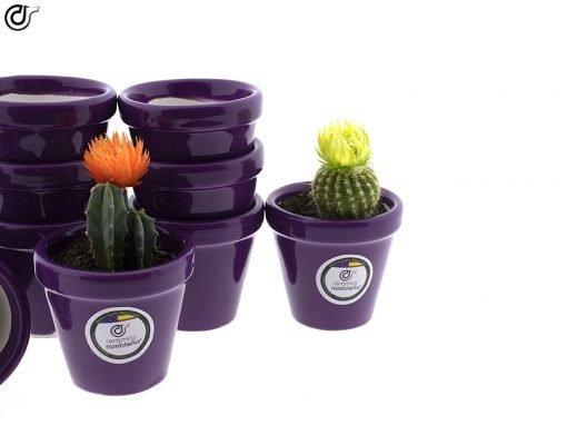comprar-macetas-para-cactus-macetas-decoradas-modelo-d84-02