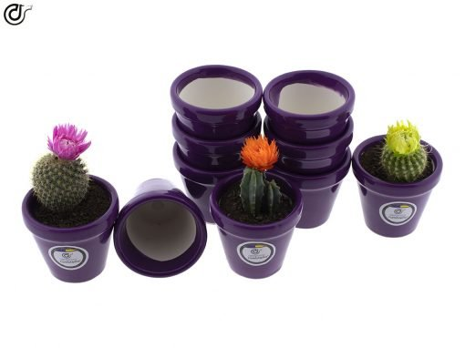 comprar-macetas-para-cactus-macetas-decoradas-modelo-d84-03