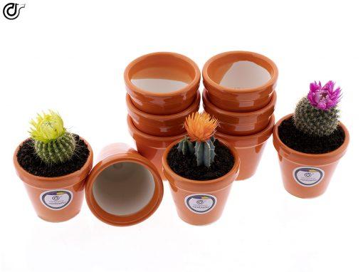 comprar-macetas-para-cactus-macetas-decoradas-modelo-d85-03
